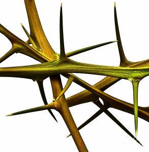 Inner Thorns